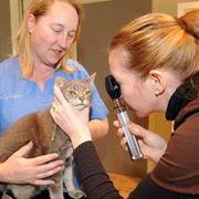 herpes gatto
