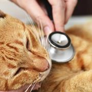 gatto cura
