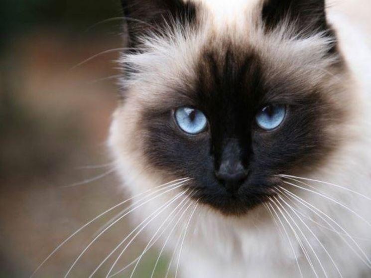 Sintomi malattie gatto