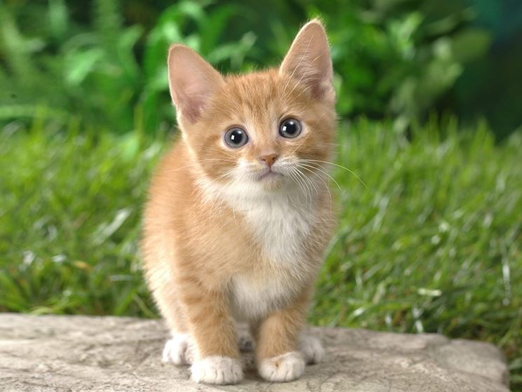 omeopatia gatto