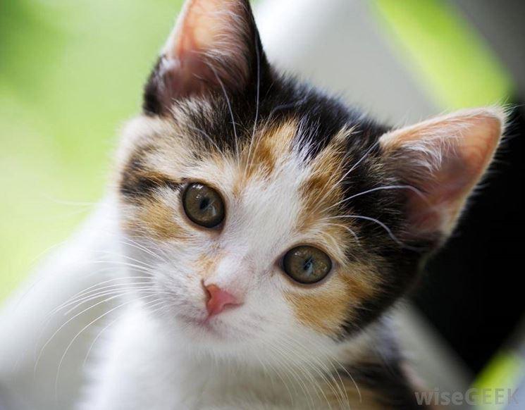 Conosciuto sverminare il gatto - Malattie Gatti TA85