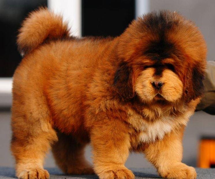 il cucciolo più caro