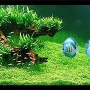 Acquario con vegetazione