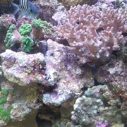 Rocce vive per acquari marini