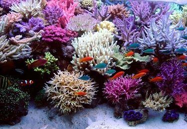 Coralli in acquario marino