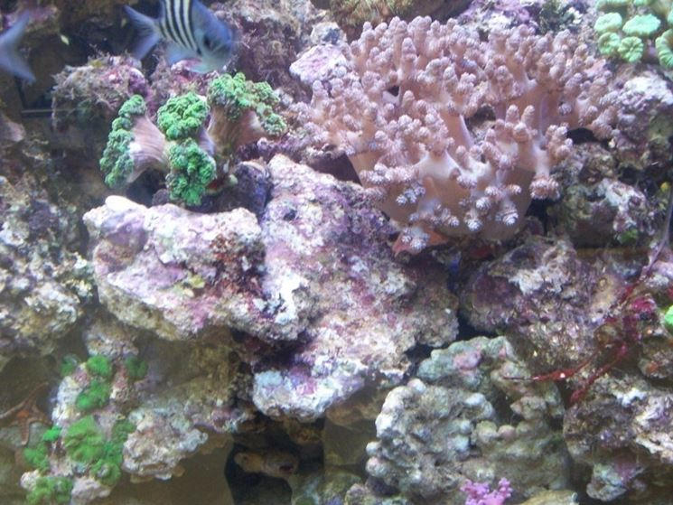Acquario marino accessori accessori per acquario for Acquario per pesci
