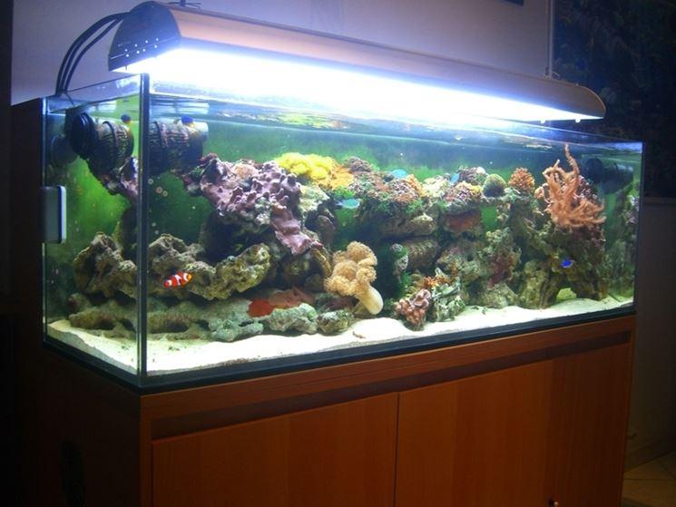 Acquario marino tropicale