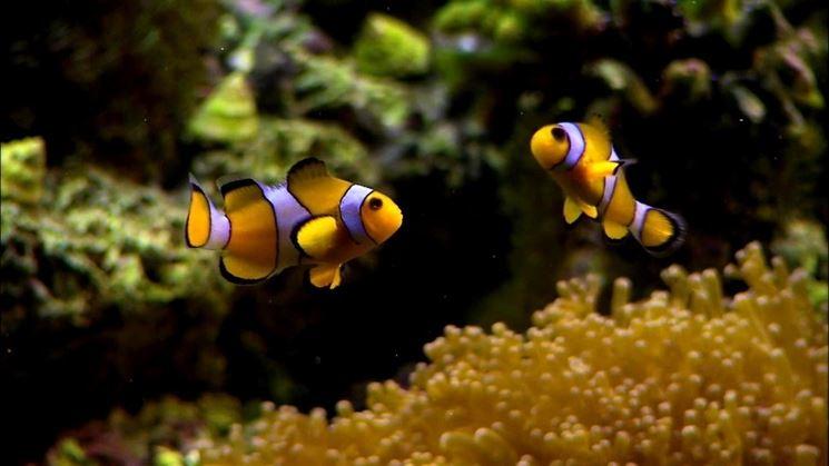 Coloratissimi pesci di acqua salata