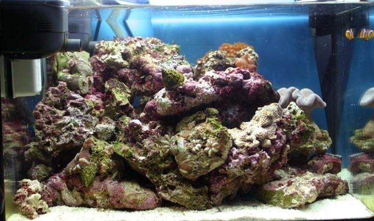 Rocce vive in acquario marino