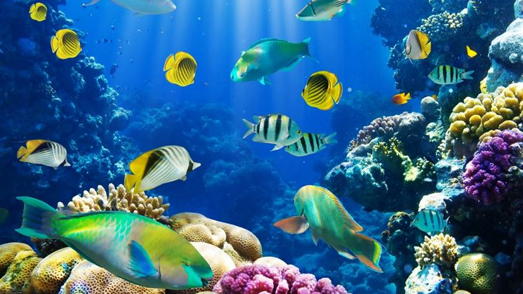 Acquari acqua salata accessori per acquario realizzare for Acqua acquario