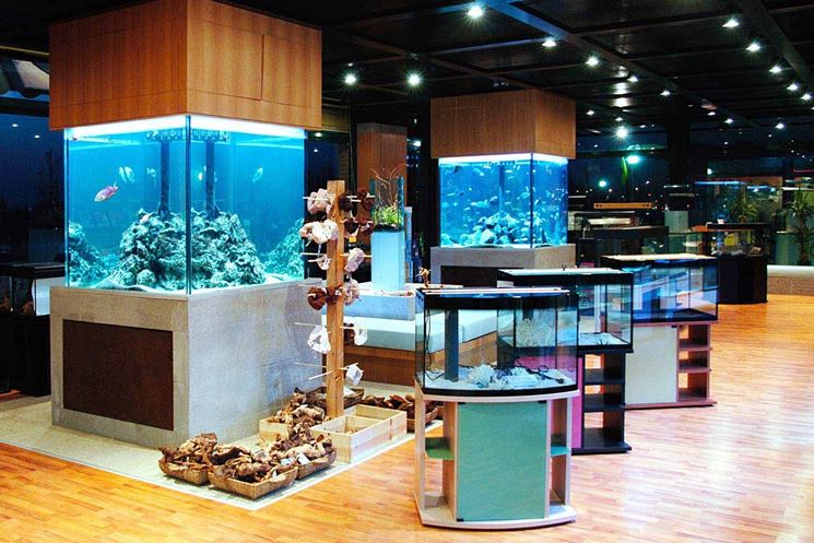 Acquario in casa accessori per la casa realizzare un - Accessori per la casa ...