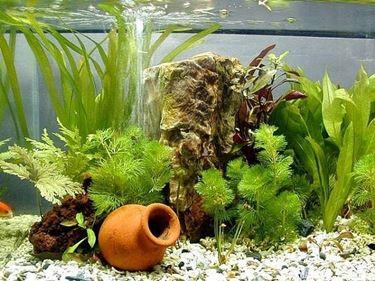 Esempio piante d'acquario