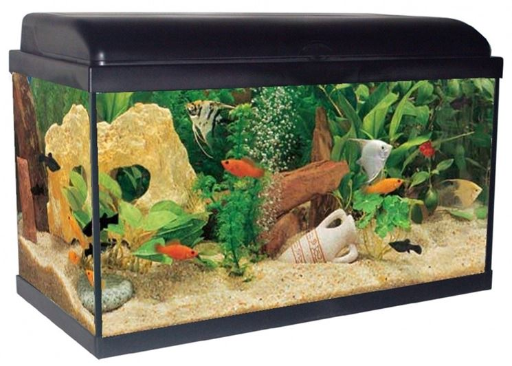 Acquario allestimento accessori per acquario come for Pesci acquario