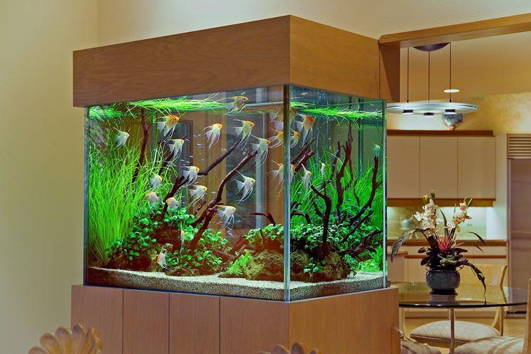 Acquario allestimento accessori per acquario come for Fondo per acquario