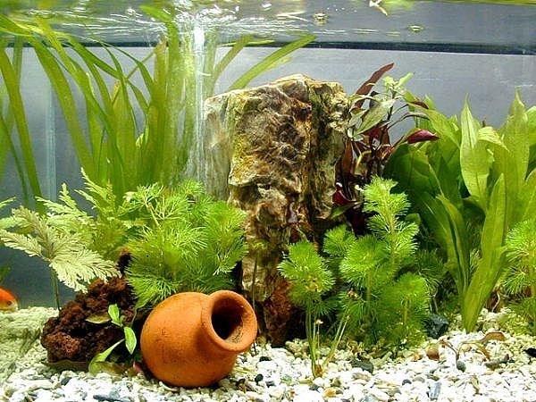 Acquario allestimento accessori per acquario come for Acquario per pesci e tartarughe