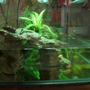 Esempio di acquario per tartarughe