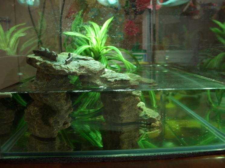 Acquario per tartarughe d 39 acqua accessori per acquario for Acqua acquario