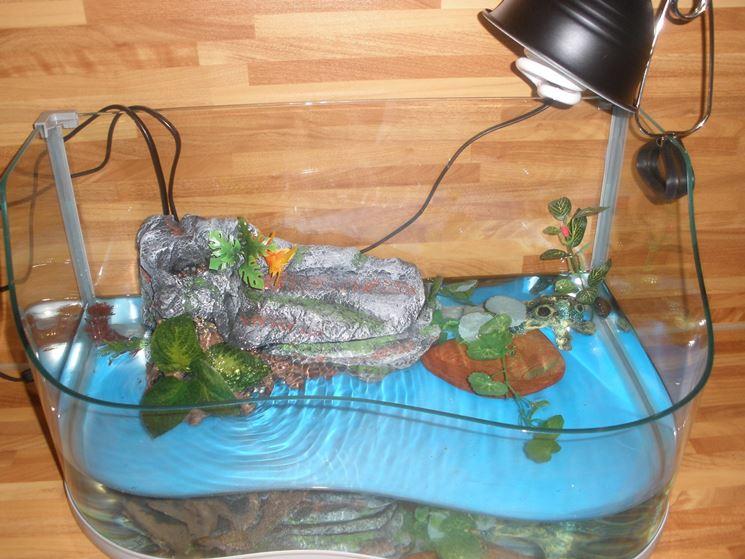 Acquario per tartarughe d 39 acqua accessori per acquario for Acquario esterno per tartarughe