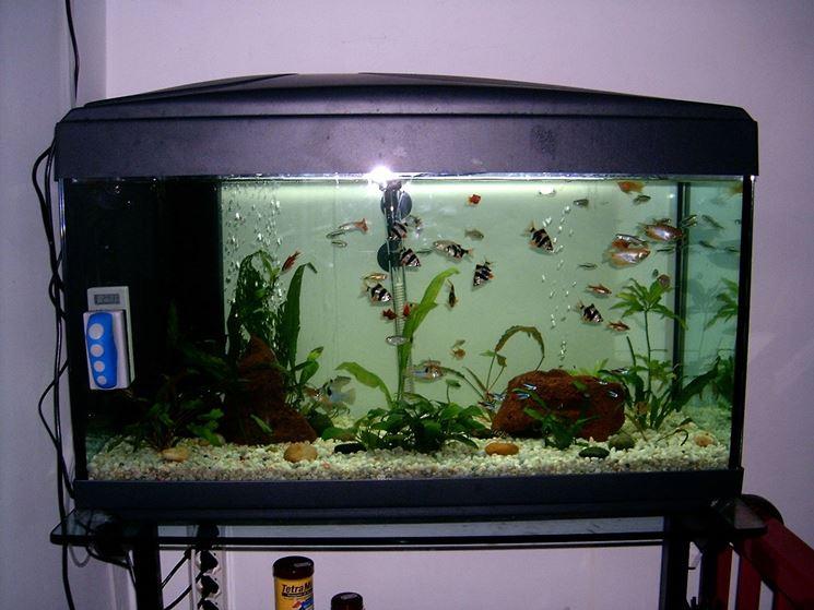 Cambio acqua acquario accessori per acquario consigli for Acquario per pesci