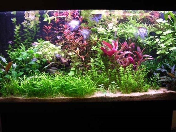 Acquario con piante e pesci