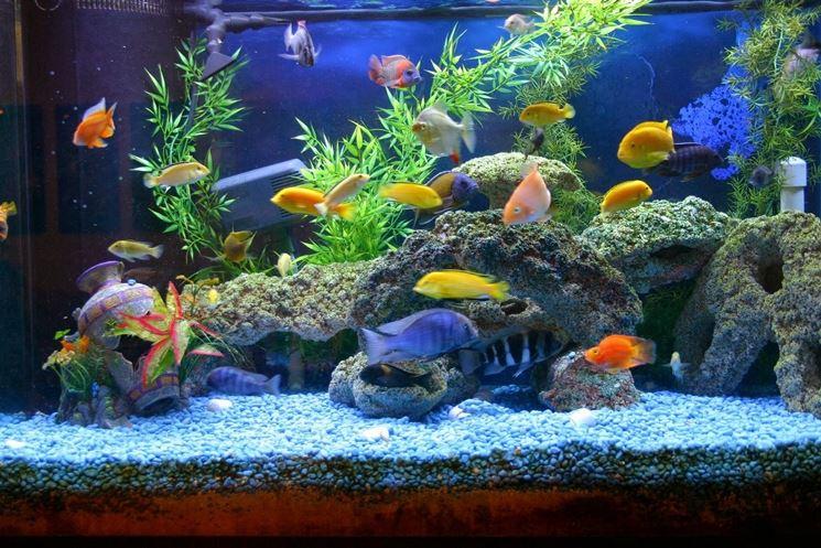 un acquario allestito