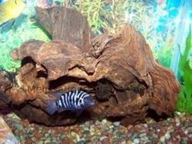 Legno acquario