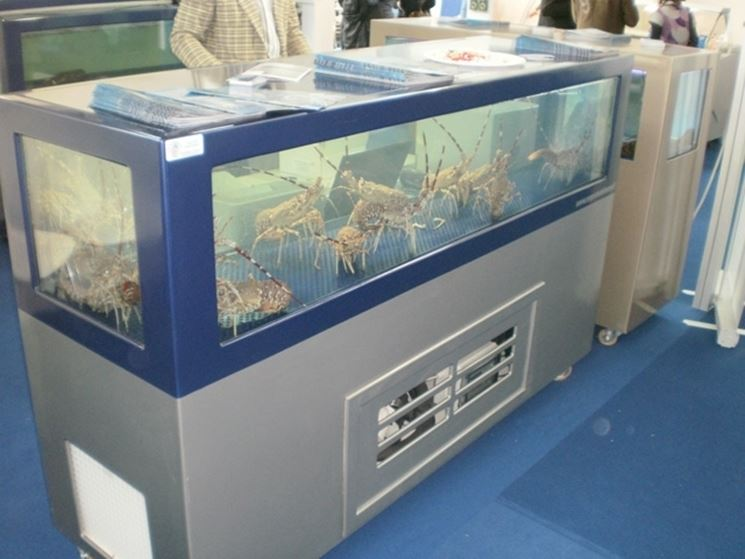 Esempio di acquario con termostato