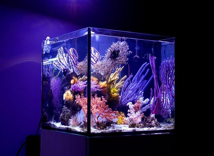 Piccolo acquario marino completo