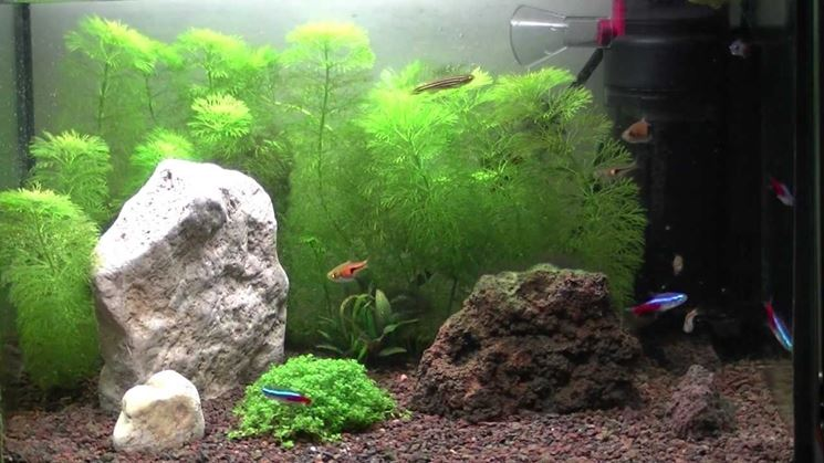 Piccolo acquario