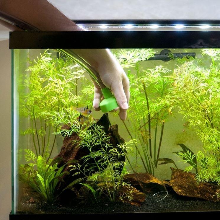 Pulizia filtro acquario accessori per acquario come for Acquario per tartarughe con filtro