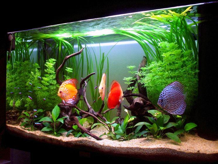 Bellissimo acquario con pesci