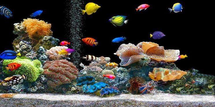 Temperatura acquario acqua dolce accessori per acquario for Pesci acqua dolce