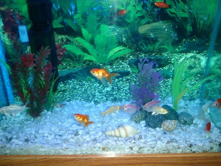 Acqua per acquario accessori per acquario come for Acquario per pesci