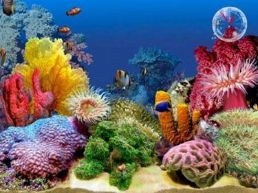 Acquari tropicali