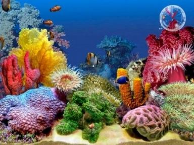Acquari tropicali acquari for Cibo per pesci tropicali