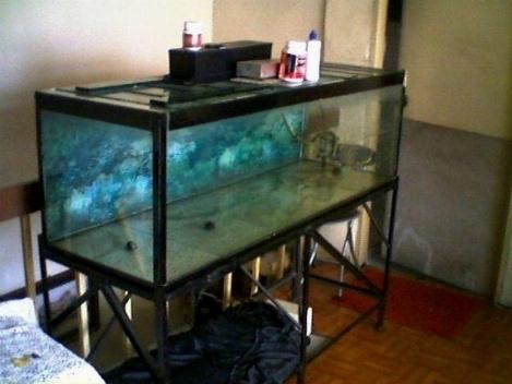 Acquario 100 litri acquari for Acquario in casa
