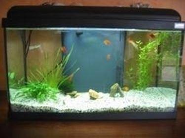 Acquario 60 litri acquari for Filtro vasca pesci