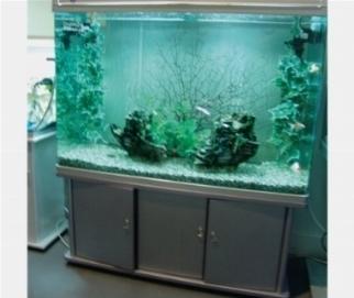 Acquario d 39 acqua dolce tropicale acquari for Acquario acqua dolce