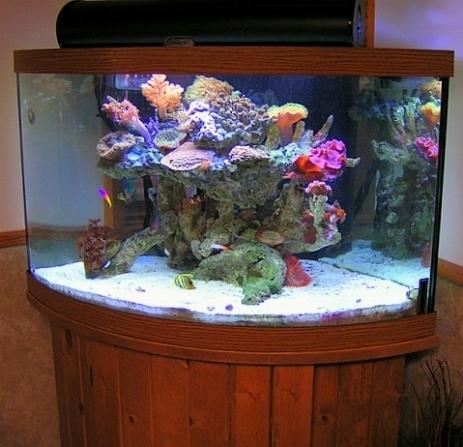 acquario dolce - acquari - caratteristiche dell'acquario ad acqua ... - Allestimento Acquario Per Betta Splendens