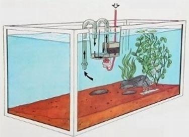 Acquario Filtro
