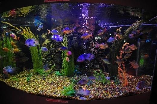 Acquario marino acquari come realizzare un acquario marino for Acquario marino 300 litri prezzo