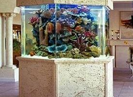 Acquario vendita
