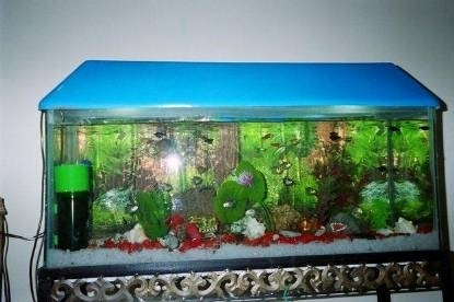 acquario vendita acquari come fare per comprare un