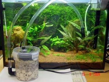 Allestire un acquario acquari for Filtro vasca pesci