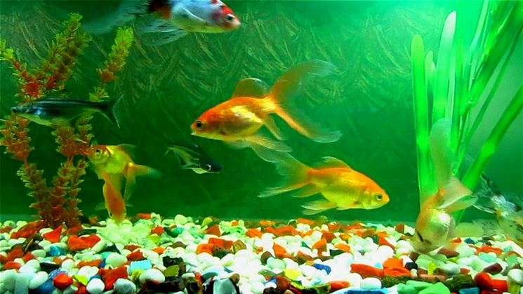 Costo acquario acquari for Pesci per acquario piccolo
