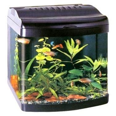 mini acquario acquari