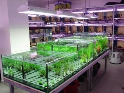 negozio acquari acquari migliori negozi per acquistare