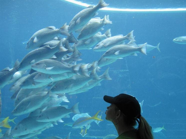 Plafoniera per acquario accessori per acquario for Pesci per acquario piccolo