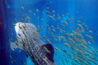 Plafoniera per acquario accessori per acquario for Neon pesci prezzo