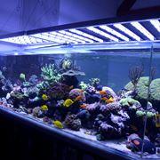 Schema plafoniera LED per acquario